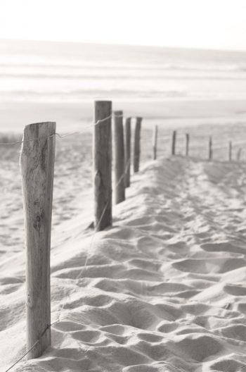 Piquets de bois dans le sable - image libre de droits de la dune landaise • Creative Lune