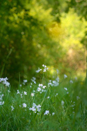 Nature et fleurs sauvages - photo Printemps à télécharger • Creative Lune