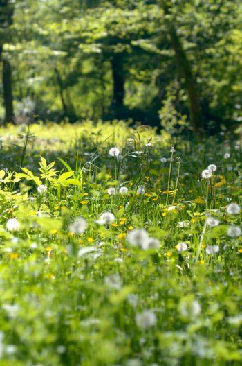 Sous-bois en fleurs - photo de nature libre de droits • Creative Lune